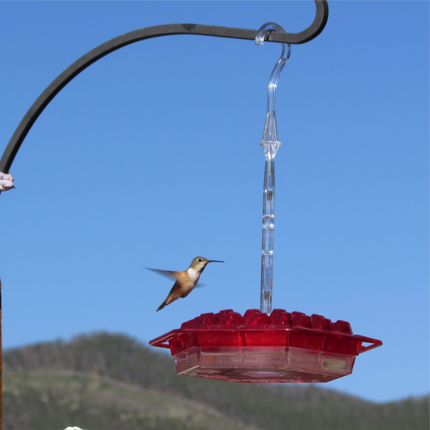 gravity so model hummingbird real products fed pink fuschia twe feeder humingbird fuchsia